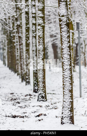 row of snow covered trees after winter downfall - Stock Photo
