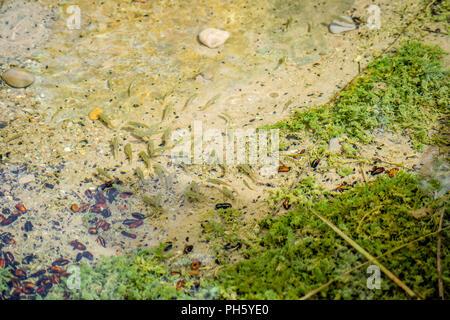 Fish in water - Stock Photo