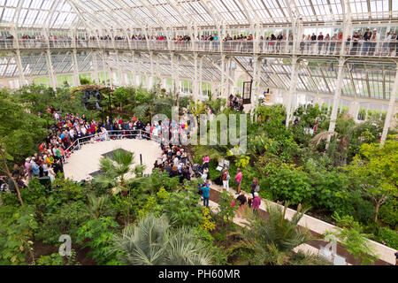View from the balcony of the restored / after the 2018 restoration of Victorian Temperate House at the Royal Botanic Garden, Kew. London. UK. (101) - Stock Photo