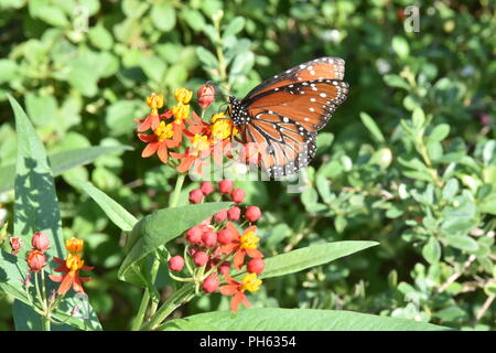 butterfly on color flowers - Stock Photo