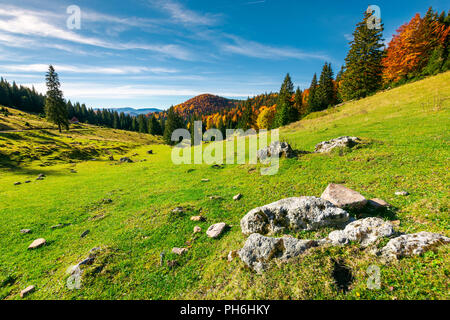 beautiful morning in mountains. mixed forest in fall colors on the hill. rocks on a grassy meadow - Stock Photo