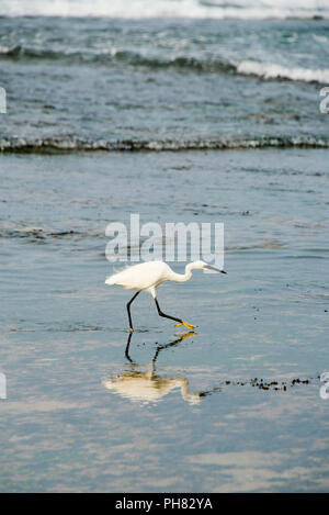 Vertical close up of a Little Egret at the beach. - Stock Photo
