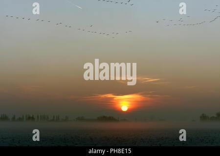 Vögel in der Abenddämmerung in Axien. - Stock Photo