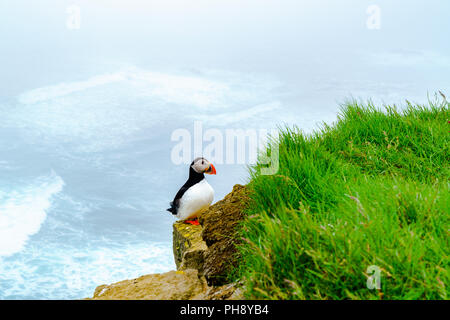 Atlantic Puffin standing on the rock - Stock Photo