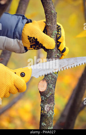 Hands with gloves of gardener doing maintenance work, pruning trees in autumn - Stock Photo