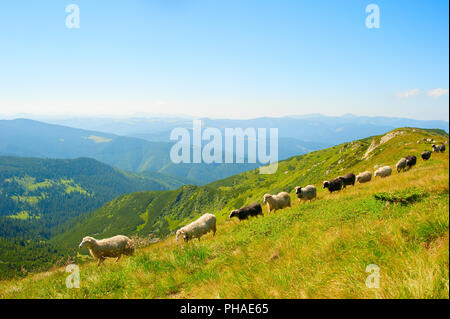 Sheeps hred in the mountains - Stock Photo