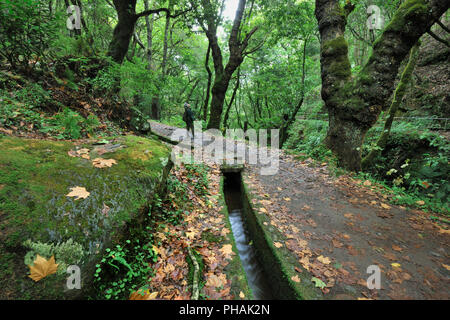 Walking trail along the 'Levada Velha', in the middle of the Laurisilva forest. UNESCO World Heritage Site. Madeira, Portugal - Stock Photo