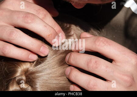 Head lice infection common in young people. Hair being checked using a special head lice comb. - Stock Photo