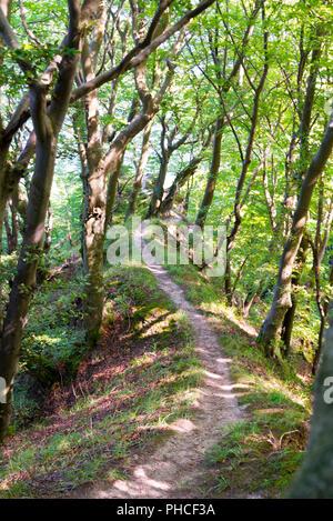ancient beech forest, ruegen - Stock Photo