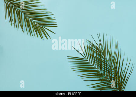 Palm leaves in the corners - Stock Photo