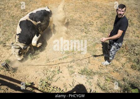 Bullfight in Bosnia - Stock Photo