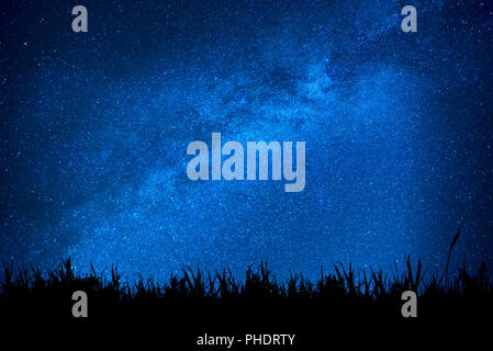 Blue night sky with stars above field of grass - Stock Photo