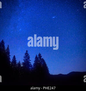 Dark blue night sky above the mystery forest - Stock Photo