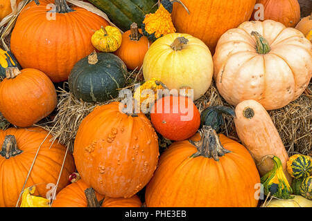 Dsplay of fall gourds and pumpkins on bales of straw or hay. - Stock Photo