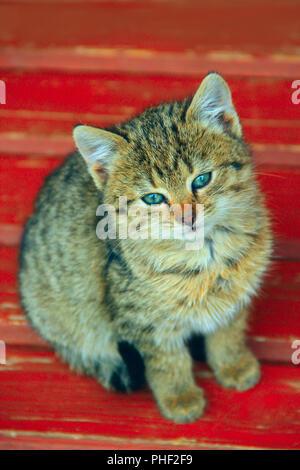 gray beautiful kitten sits on a bench - Stock Photo