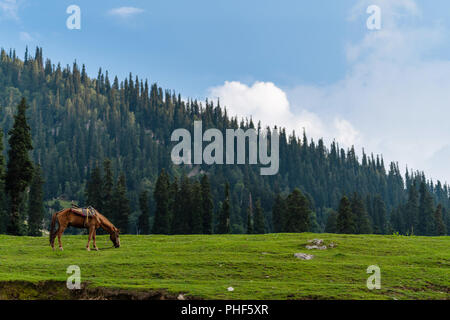 scenic countryside landscape, horse grazing grass in meadow in the morning - Stock Photo