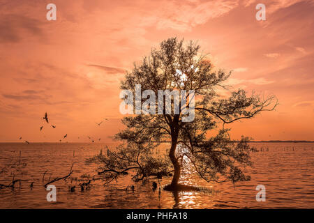 Big trees on the water when sunrise / sun set at mangrove forest on the Thai bay tropical sea beautiful nature background - Stock Photo