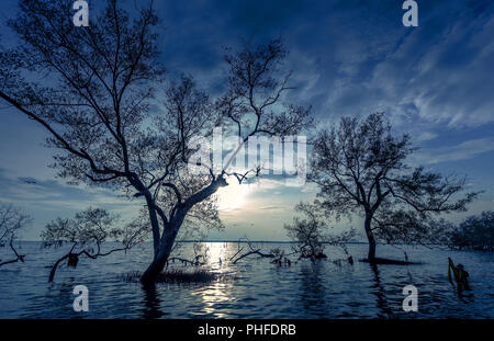 Big trees on the water moon night with fisherman at mangrove forest on the Thai bay tropical sea beautiful nature background - Stock Photo