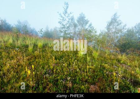 Misty morning dew on mountain meadow - Stock Photo