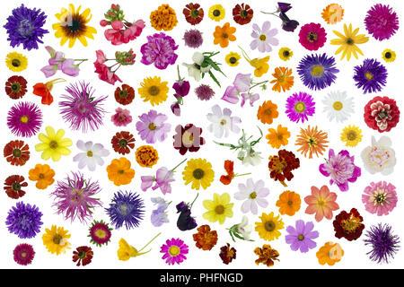 Big flowers set isolated - Stock Photo