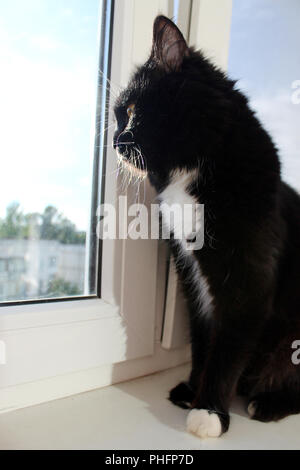 cat sits at the window and looks out - Stock Photo