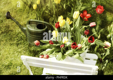 tulips colorful spring season garden chair - Stock Photo
