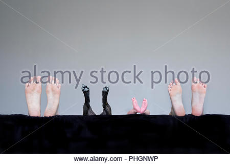 Feet of family and dog - Stock Photo