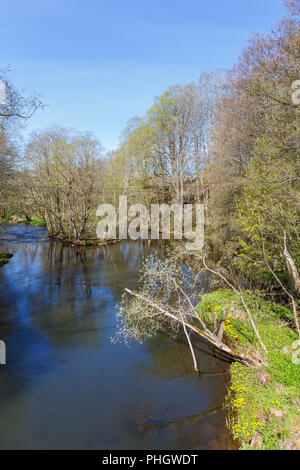 River flowing through a deciduous forest in spring - Stock Photo