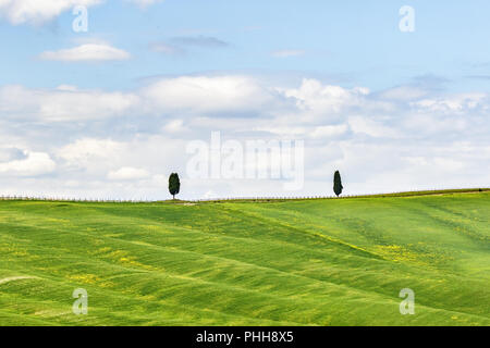Lonely cypress tree on the hill in the field - Stock Photo