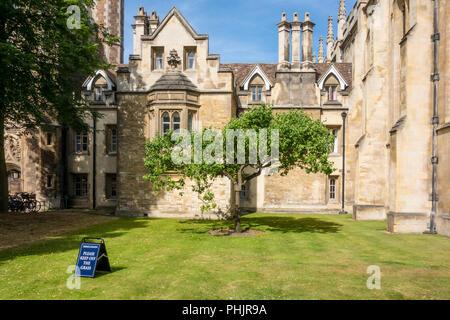 Descendant of Newton's Apple Tree, Trinity College, Cambridge, UK - Stock Photo