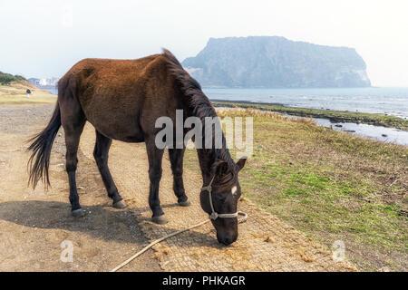 horse in gwangchigi beach - Stock Photo