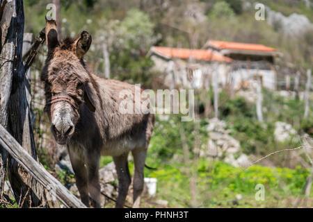 Small sad donkey on a farm - Stock Photo