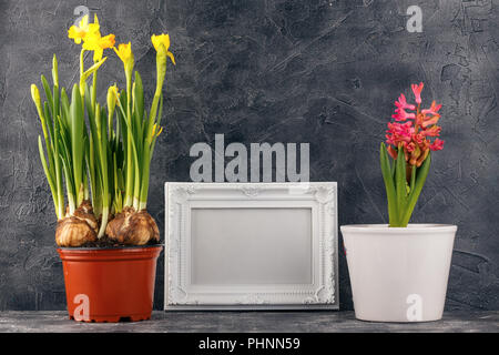 Spring flowers in pots - Stock Photo