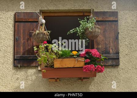 Fenster, Blumen, Preysingstrasse, Alt-Haidhausen, Haidhausen, Muenchen, Bayern, Deutschland - Stock Photo