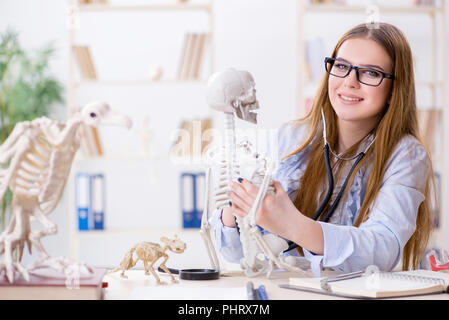 Student sitting in classroom and studying skeleton - Stock Photo
