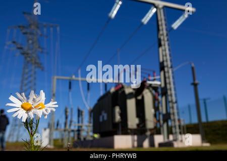 Umspannwerk, transformer, Flower - Stock Photo