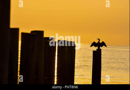 Silhouette of a cormorant on a piling at the North Carolina and Virginia border on the Outer Banks. - Stock Photo