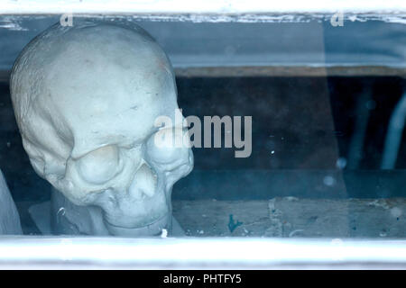Human skull made of gypsum for educational purposes behind glass art and medical school anatomy model - Stock Photo