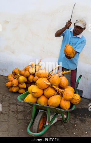 Vertical portrait of a man slicing a king coconut with a machete. - Stock Photo