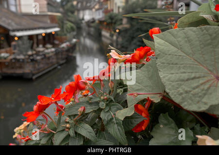 Petite Venise in Colmar - Stock Photo