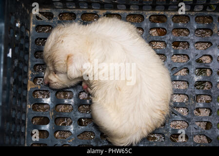 White little puppy resting in a basket - Stock Photo
