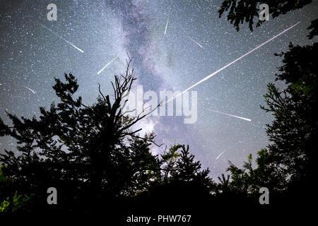 Trees silhouette Milky Way falling stars - Stock Photo