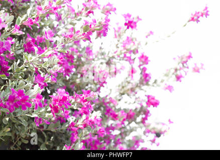 Beautiful pink purple flower blooming against green leaves. - Stock Photo