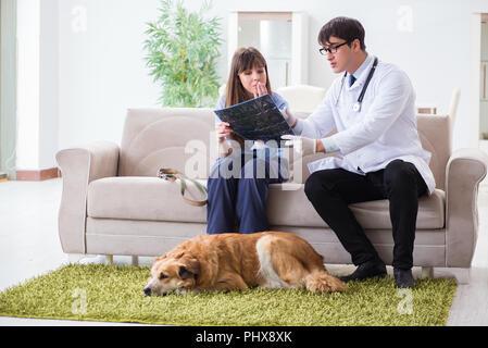 Vet doctor visiting golden retriever dog at home - Stock Photo