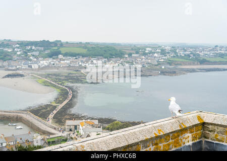 Marazion, England -  May 2018 : Seagull sitting on a castle walls overlooking footpath leading to the St Michaels Mount - Stock Photo