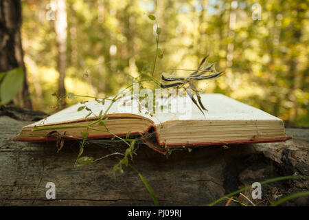 Open book on wooden background with magic mystery plant bokeh effect in the background - Stock Photo