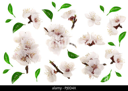 Branch with apricot flowers isolated on white background. Top view. Flat lay. Set or collection - Stock Photo