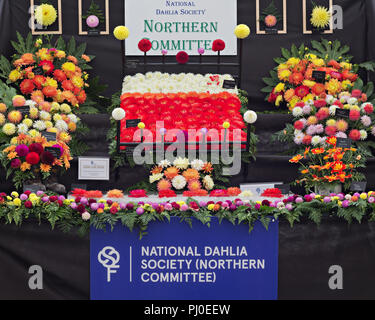Prize winning display by the National Dahlia Society Northern Commitee at the 2018 Southport Flower Show. - Stock Photo
