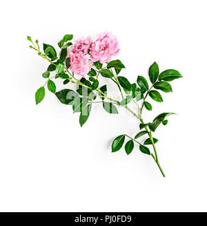 Pink rose flower with stem and leaves. Small climbing roses in summer garden. Single object isolated on white background. Top view, flat lay. Design e - Stock Photo