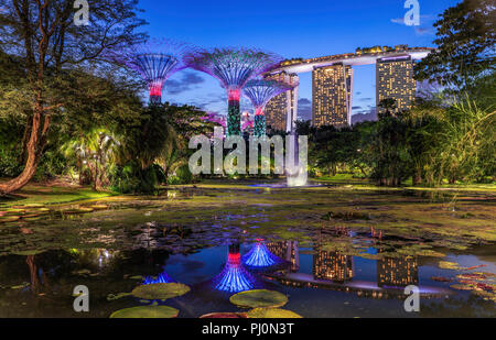 The Waterlily Pond at Gardens By the Bay, Singapore. - Stock Photo